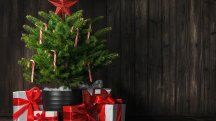 6 things to think about when choosing the right Christmas tree for your home