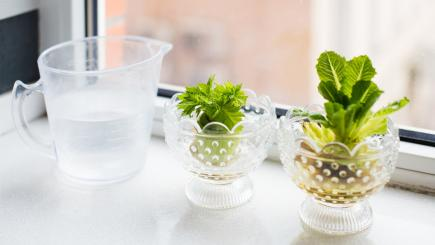 7 of the tastiest foods you can miraculously regrow from kitchen leftovers