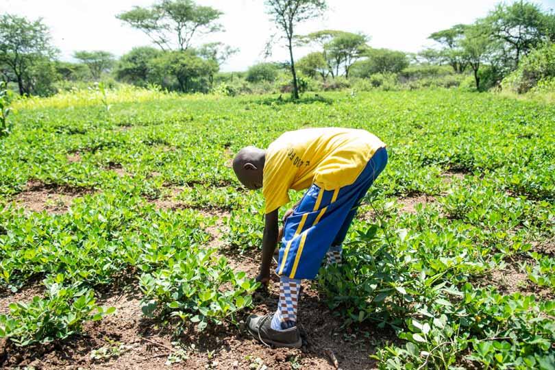 Boy weeding a field - copyright 4M UK