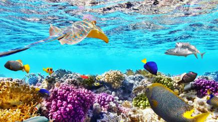 6 Of The Best Coral Reefs You Must See While You Still Can