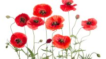 Coventry Building Society launches new Poppy Bond