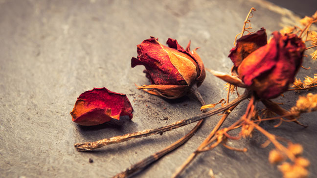5 crafty things to do with dead flowers | BT on