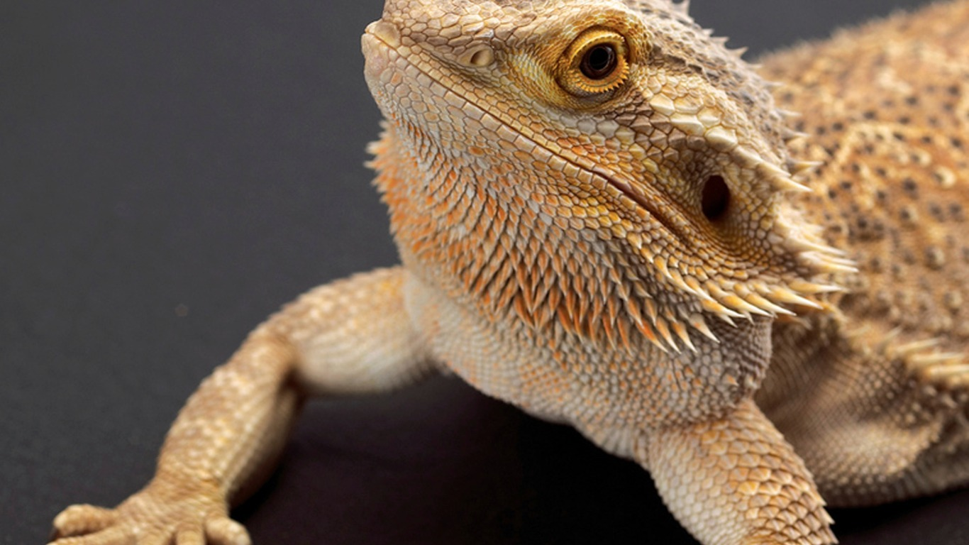 From angry pet dragons to angry birds: bizarre home insurance claims