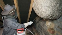 Giant wasp nest found in attic in Corby