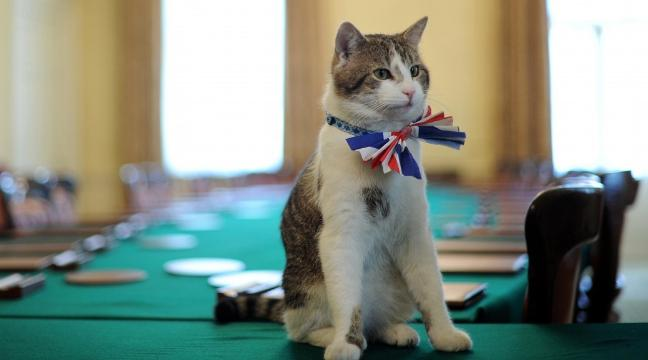 http://home.bt.com/news/news-extra/good-news-for-larry-fans-cabinet-office-has-confirmed-downing-street-cat-will-not-be-evicted-11364073038529