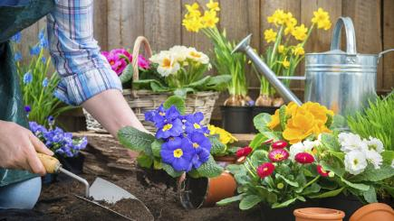 12 ways to get your garden ready for spring