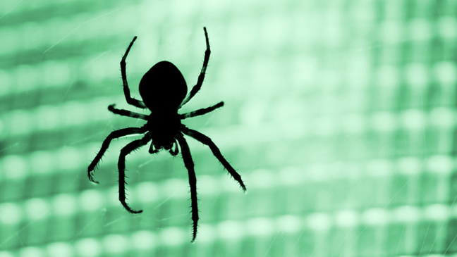 8 Ways To Keep Spiders Out Of Your Car Bt