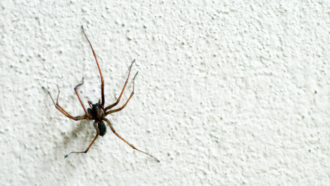 40 Tips For Keeping Spiders Out Of Your Home BT Custom How To Get Rid Of Spiders In Bedroom
