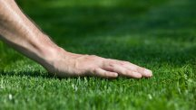 Stock image of a gardener's hand on a lawn.