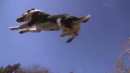 Parkour Dog Training Videos Jumpy