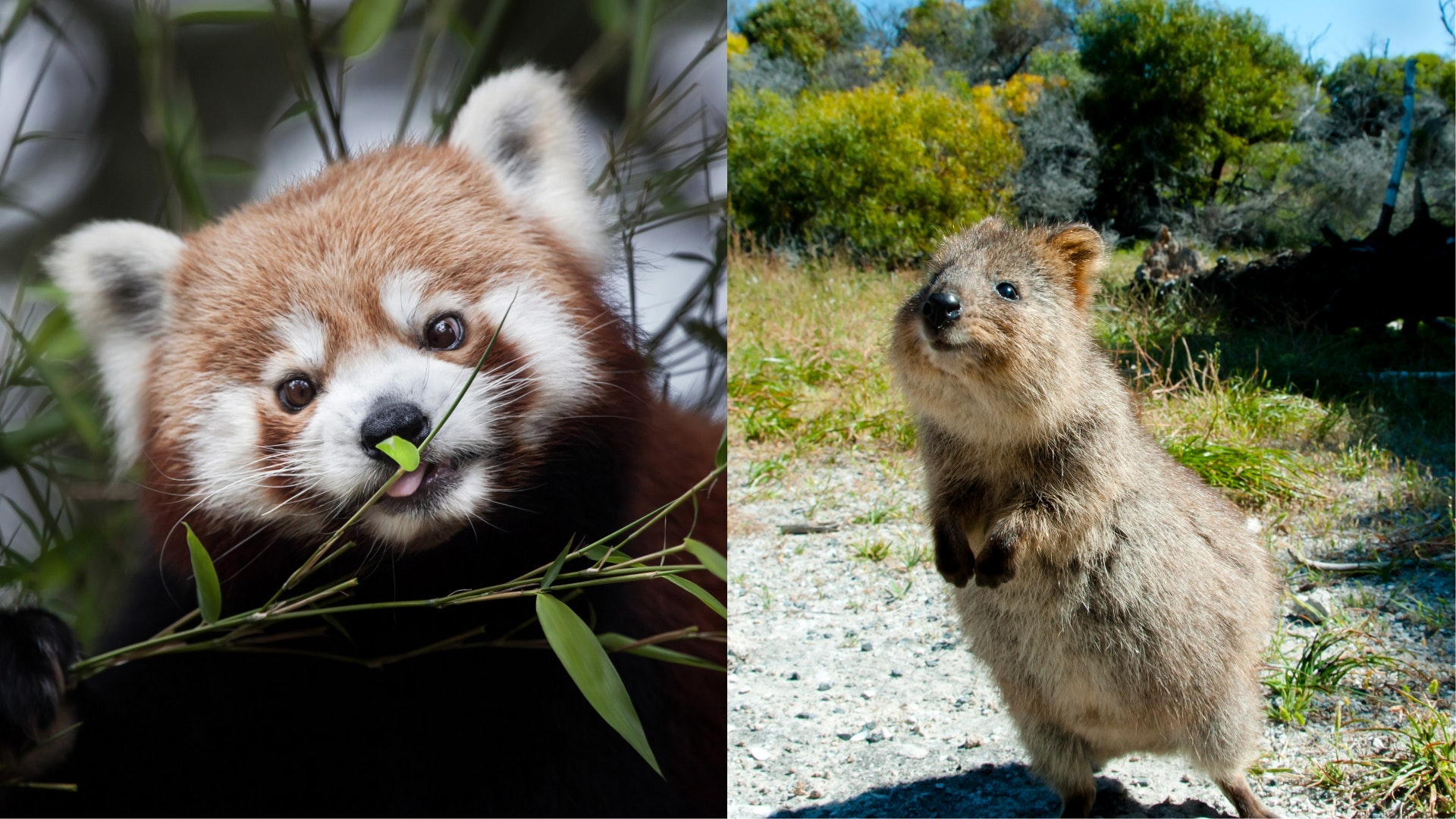 Just 11 very underrated cute animals that deserve to go ...