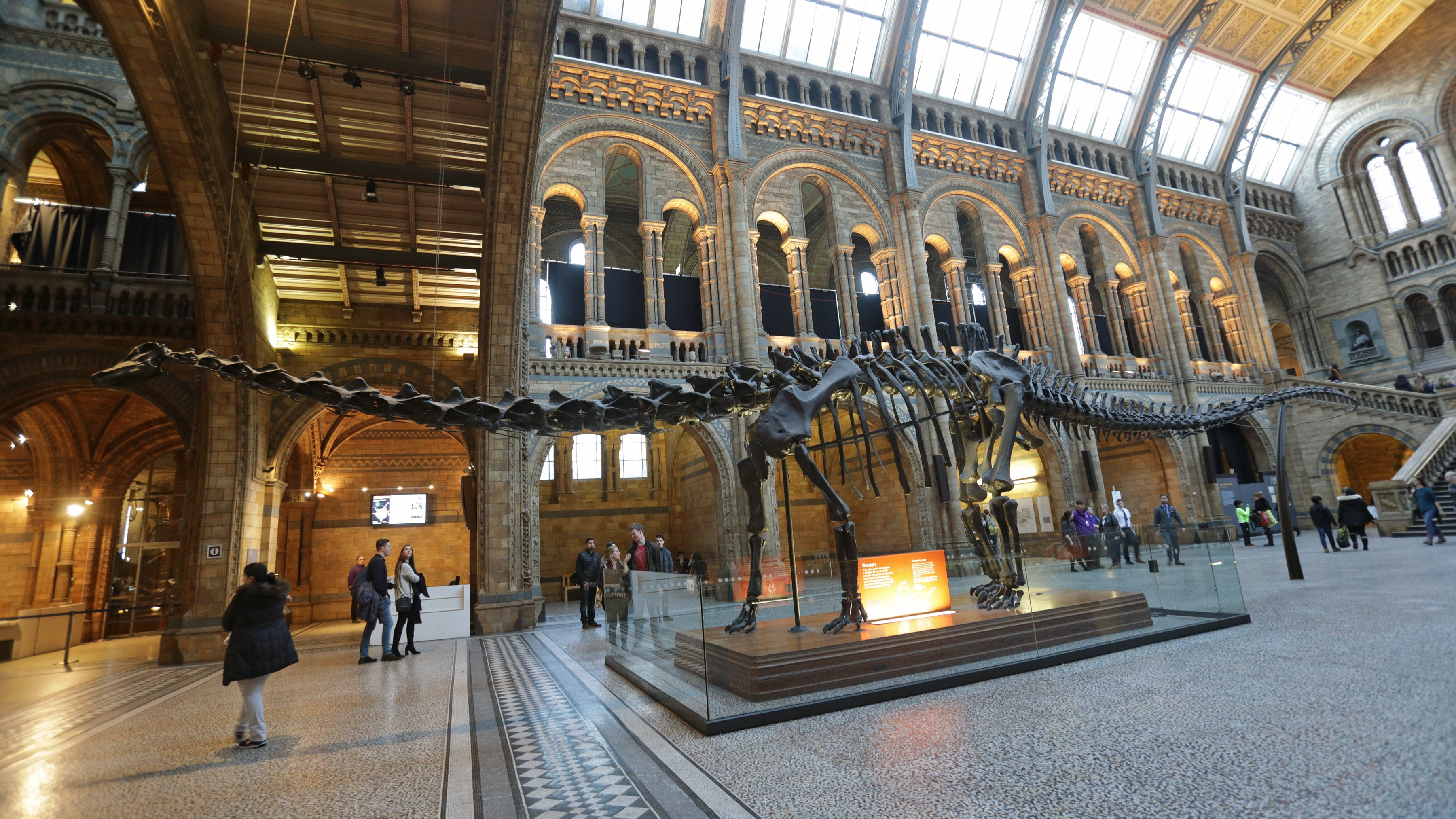 Natural History Museum S Dippy The Diplodocus Begins Uk