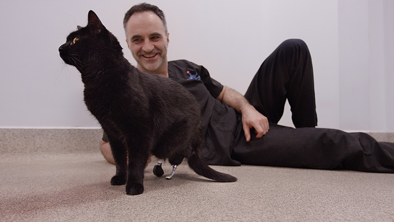 Friday 13th additionally 10 Years Of Fitzpatrick Referrals together with Stradivarius further Supervet Fixes Past It Pets In Pictures 41363898362051 in addition Watch. on oscar bionic cat