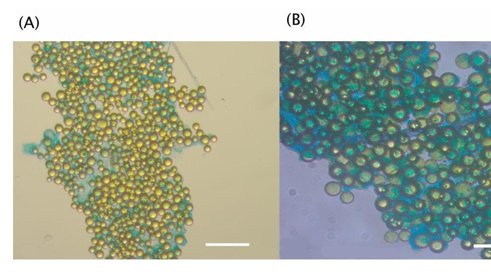 バイオポリマーによるプラスチックの凝集体