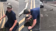 See these ducklings reunited with mother duck after falling into drain