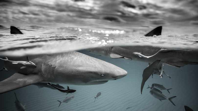 Shark Week 2019 in the UK: What's on and when | BT