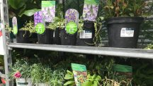 Should you buy plants on sale in garden centres?