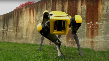 The latest offering from Boston Dynamics could be the robot dog of the future
