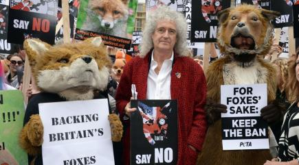 We need fox hunting to be kicked out for ever, says Brian May after Goverment vote is postponed