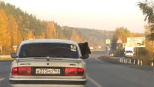 Screenshot taken from a dash cam of a man transporting a bear in the back of his car in Ekaterinburg, Russia.